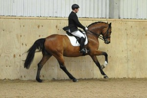 Mark Butler Dressage training clinic at Saddlesdane